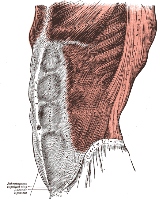 The core muscles are key to all movements